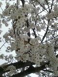 桜の木の下☆